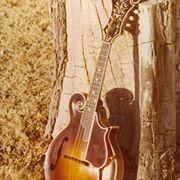 the-mandolins